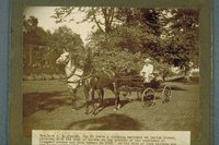 A.L. Foster driving his span of horses, Prospect Avenue, Hartford