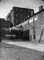 Backyard laundry lines, Hartford
