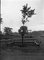 Benches and trees (park), Hartford