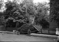 Boy in front of downed tree and fence, Hartford