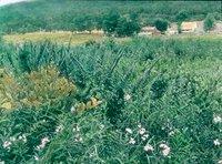 Marsh Meadow