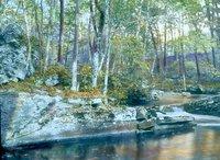 Hemlock Woods