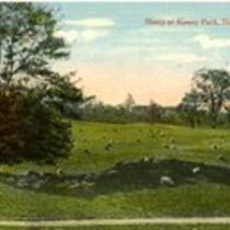 Sheep at Keney Park, Hartford, Conn.